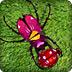 甲殼蟲祖瑪